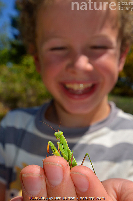 Child with a Praying Mantis (Mantodea) on hand. France, Europe, August. Model released.  ,  animal theme,Boy,catalogue4,child,CHILDREN,curiosity,Curious,EDUCATION,ENJOYMENT,EUROPE,FLOWERS,focus on foreground,FRANCE,front view,half length,holding,INSECTS,LEARNING,Mantodea,nature,one animal,one boy only,one person,outdoors,PEOPLE,PETS,PHOTOGRAPHY,praying mantis,SMILING,STANDING,sunlight,VERTICAL,WILDLIFE,YOUNG,Selective focus,Invertebrates  ,  Dan Burton
