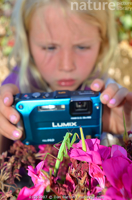 Child photographing Praying Mantis (Mantodea) on flowers. France, Europe, August. Model released.  ,  CHILDREN,CURIOSITY,CURIOUS,EDUCATION,EUROPE,FLOWERS,FRANCE,INSECTS,LEARNING,NATURE,OUTDOORS,PEOPLE,PHOTOGRAPHY,TAKING PHOTOS,VERTICAL,WILDLIFE,YOUNG,Invertebrates  ,  Dan Burton