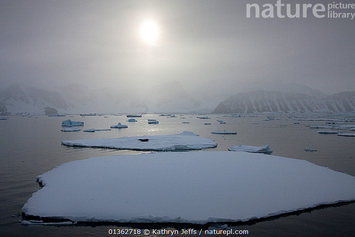 Sun low in the sky over floe ice near the Antarctic peninsula, Antactica, January 2009, Taken on location for BBC Frozen Planet series, ANTARCTICA,COASTS,FOG,GREY,ICE,LANDSCAPES,MIST,NHU,SEA,SUN,SURFACE,WATER,WHITE,WEATHER, Kathryn Jeffs