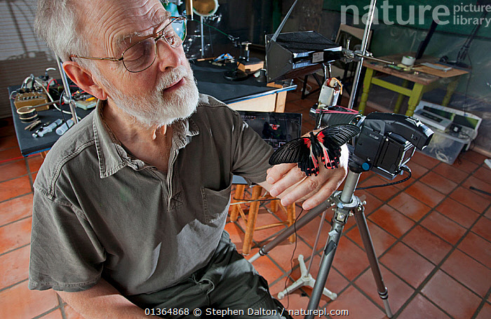 Photographer Stephen Dalton in his studio handling a tropical butterfly, Sussex, UK, 2011  ,  BUTTERFLIES,CAMERA,CAUCASIAN,EUROPE,INDOORS,INSECTS,MAN,PEOPLE,PHOTOGRAPHER,PHOTOGRAPHY,PORTRAITS,STUDIO,UK,Invertebrates,United Kingdom  ,  Stephen Dalton