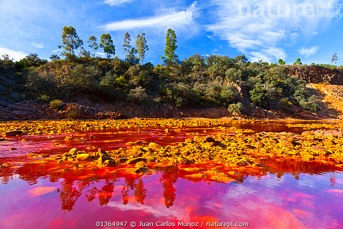 Red waters of the Rio Tinto, coloured by dissolved minerals, primarily iron. Andalusia, Spain, December 2011., ANDALUCIA,ANDALUSIA,EUROPE,HUELVA,LANDSCAPES,MINERALS,RED,REFLECTIONS,RIO,RIVERS,SPAIN,TINTO,WATER, Juan Carlos Munoz