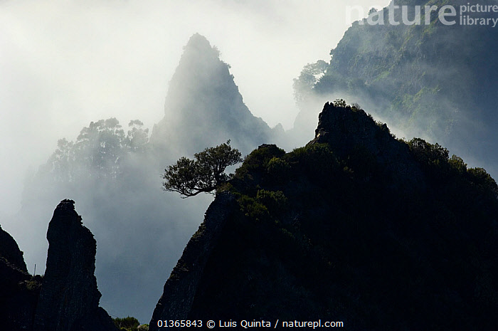 Pico do Areeiro, Madeira Island,  April 2009.  ,  ATLANTIC,ATMOSPHERIC,catalogue4,CLIFFS,CLOUDS,elevated view,EUROPE,Fog,GROWTH,LANDSCAPES,Madeira,Madeira Island,MIST,misty,mountain peak,MOUNTAINS,nature,Nobody,Pico do Areeiro,PORTUGAL,remote,RESERVE,resilience,ROCKS,Scenic,SILHOUETTES,TREES,WILDLIFE,Marine,Geology,Weather,Concepts,PLANTS  ,  Luis Quinta