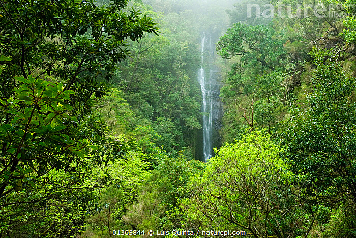 Waterfall in Laurisilva Forest, Madeira Island, April 2009.  ,  ATLANTIC,EUROPE,FORESTS,LANDSCAPES,LUSH,MADEIRA,PORTUGAL,RESERVE,SUB TROPICAL,TREES,WATER,WATERFALLS,Marine,PLANTS  ,  Luis Quinta