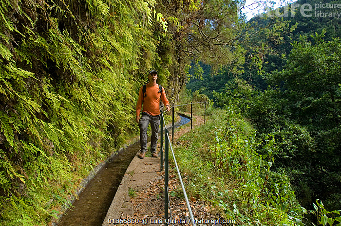 Man walking along levada, irrigation channel, through Laurisilva Forest, Madeira Island, October 2011.  ,  WALKING,ATLANTIC,CLIFFS,FORESTS,HIKING,LANDSCAPES,LEISURE,LEVADAS,LICHEN,MADEIRA,MAN,MOSS,PEOPLE,PLANTS,RESERVE,SUB TROPICAL,TREES,WATER,Marine,Geology  ,  Luis Quinta