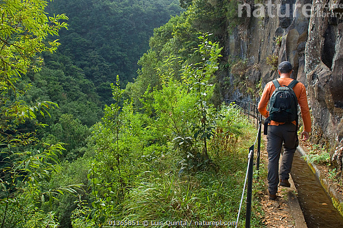 Man walking along levada, irrigation channel, through Laurisilva Forest, Madeira Island, October 2011.  ,  ATLANTIC,CLIFFS,EUROPE,FORESTS,LANDSCAPES,LEVADAS,LICHEN,MADEIRA,MAN,MOSS,PEOPLE,PLANTS,PORTUGAL,RESERVE,SUB TROPICAL,TREES,WALKING,WATER,Marine,Geology  ,  Luis Quinta