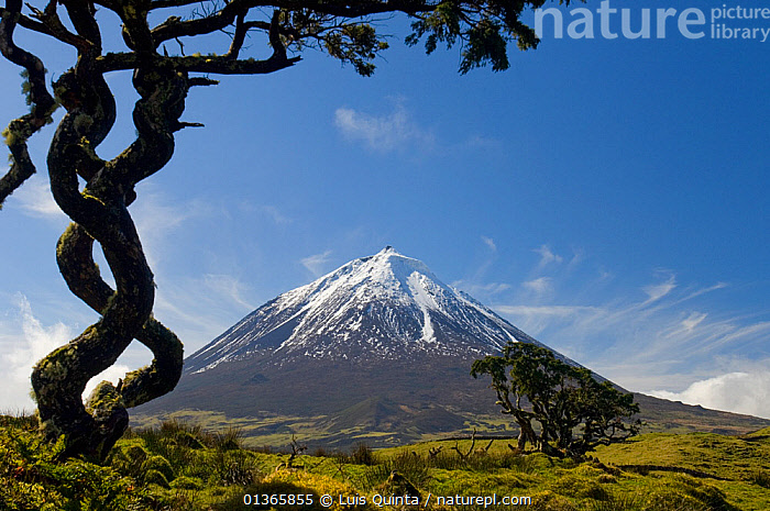 Mount Pico, volcanic mountain, Pico Island, Azores, March, 2010.  ,  ATLANTIC,ATLANTIC ISLANDS,Azores,BLUE,catalogue4,CLOUDS,EUROPE,imposing,LANDSCAPES,Mount Pico,Mountain,MOUNTAINS,nature,Nobody,Pico Island,PLANTS,PORTUGAL,Scenic,SKY,SNOW,snowcapped,TREES,treetrunk,twisted,Volcano,Marine,Weather  ,  Luis Quinta