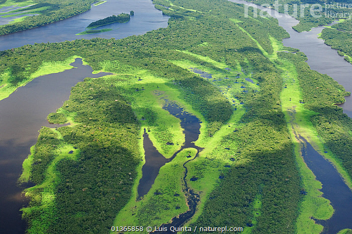 Aerial view of Igapo flooded rainforest, River Negro, Anavilhanas Ecological Station, Brazil, January, 2010.  ,  AERIALS,AMAZON,BRAZIL,FORESTS,LANDSCAPES,RIVERS,SOUTH AMERICA,TREES,TROPICAL RAINFOREST,WATER,WETLANDS,PLANTS  ,  Luis Quinta