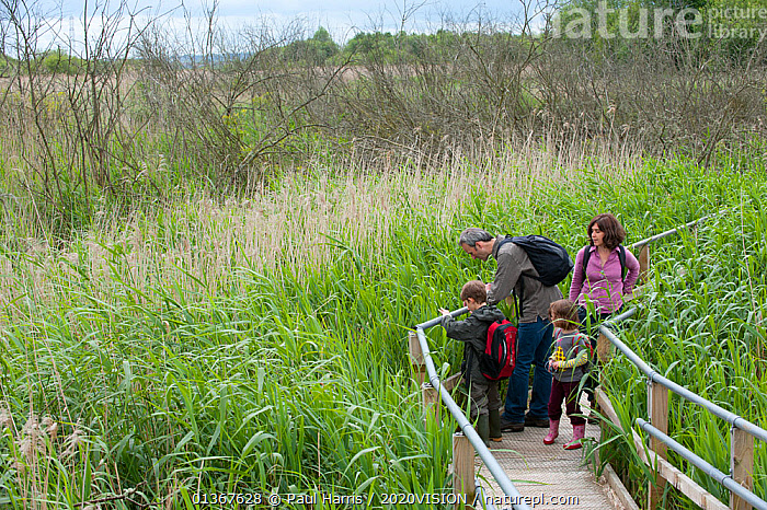 Family on raised wooden walkway on visit to the Westhay Nature Reserve, Somerset Levels, UK, June 2011, model released  ,  2020VISION,BIRDWATCHING,BOY,CAUCASIAN,CHILDREN,CONSERVATION,DAUGHTER,EDUCATION,ENGLAND,ENVIRONMENTAL,EUROPE,FAMILIES,FATHER,GIRL,INVERTEBRATES,LANDSCAPES,LEISURE,MAN,MOTHER,OUTDOORS,PATHS,PEOPLE,RESERVE,SOMERSET LEVELS,UK,WETLANDS,WOMAN,WOODEN,United Kingdom,2020cc  ,  Paul Harris / 2020VISION