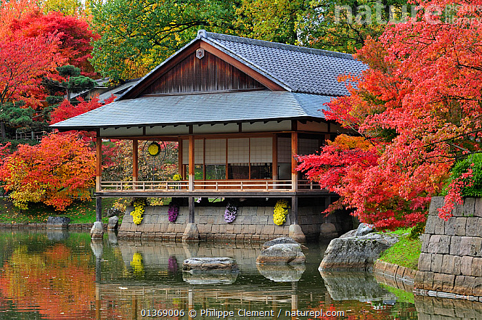 Traditional tea house along pond and Smooth Japanese maples (Acer palmatum) showing leaves in colourful red and orange autumn colours at Japanese garden in Hasselt, Belgium October 2011  ,  ACERACEAE,BUILDINGS,DICOTYLEDONS,EUROPE,GARDENS,LANDSCAPES,ORNAMENTAL,PLANTS,PONDS,WATER  ,  Philippe Clement