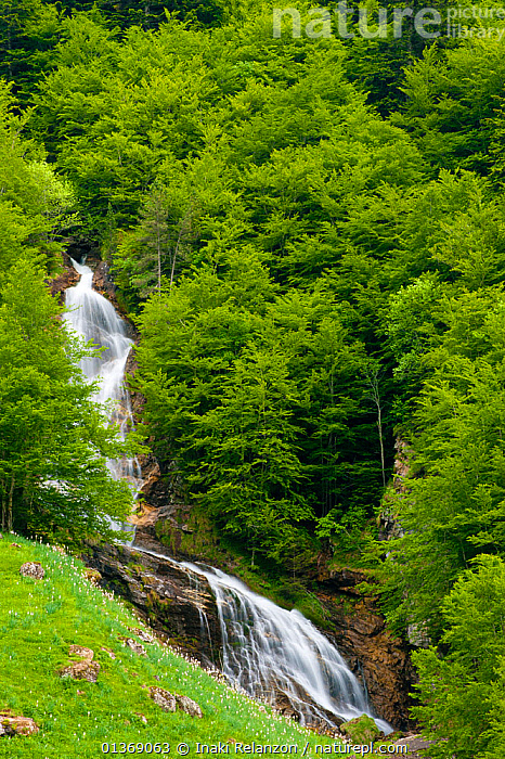 Gavarnie Falls, one of the biggest waterfalls in Europe, 512 m tall, Pyrenees, France, June. 2011.  ,  CIRQUE DE GAVARNIE,EUROPE,FRANCE,GRASS,GREEN,HILLS,LANDSCAPES,MOUNTAINS,PYRENEES,TREES,UPLANDS,VERTICAL,WATER,WATERFALLS,Plants  ,  Inaki Relanzon