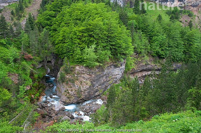 Looking down at a river in Gavarnie, Pyrenees, France, June 2011.  ,  CIRQUE DE GAVARNIE,CLIFFS,EUROPE,FRANCE,HIGH ANGLE VIEW,LANDSCAPES,MOUNTAINS,PYRENEES,RIVERS,ROCKS,TREES,WATER,Geology,PLANTS  ,  Inaki Relanzon