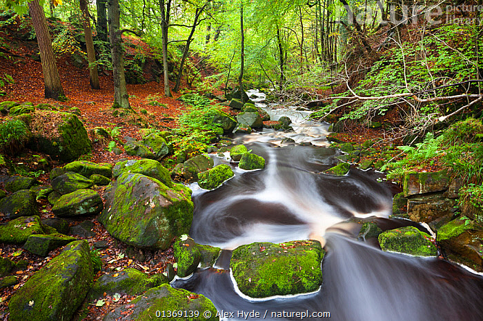 River running through beech woodland, Peak District National Park, Derbyshire, UK, October.  ,  BLURRED,BOULDERS,DECIDUOUS,ENGLAND,EUROPE,FLOWING,FORESTS,GREEN,HABITAT,LANDSCAPES,MOSS,PLANTS,RIVERS,ROCKS,SCENIC,STREAMS,TIME EXPOSURE,TREES,UK,WATER,WOODLANDS,United Kingdom  ,  Alex Hyde