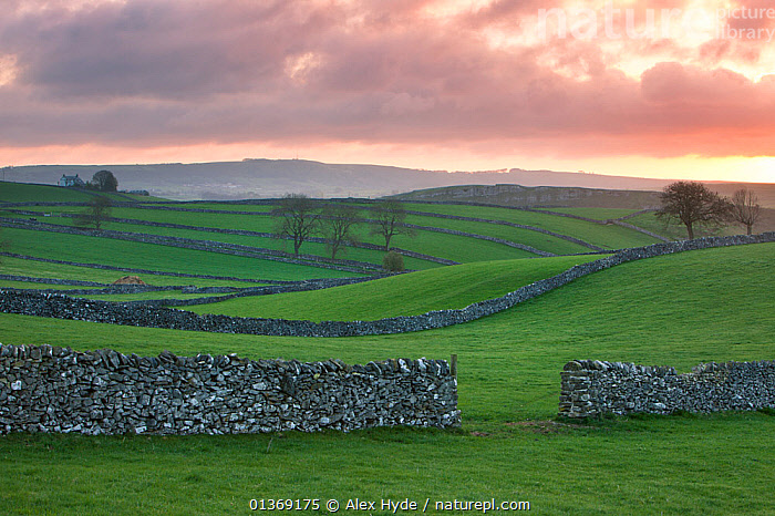 Fields and drystone walls near the village of Litton at sunrise, Peak District National Park, Derbyshire, UK, April.  ,  COUNTRYSIDE,DRY STONE WALLS,ENGLAND,EUROPE,FARMLAND,FIELD,GRASS,GREEN,HILLS,HILLSIDE,LANDSCAPES,MORNING,NP,SCENIC,STONE,SUNRISE,TRADITIONAL,UK,WALLS,Plants,National Park,United Kingdom  ,  Alex Hyde