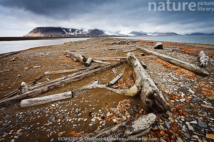 Timber washed onto the shore by the strong arctic currents. There are no trees on Spitzbergen, all the wood comes from the Siberian Coast, Poolepynten,  Spitzbergen, Svalbard, Norway, July 2011  ,  ARCTIC,catalogue4,COASTS,DEFORESTATION,driftwood,EUROPE,LANDSCAPES,lumber,MOUNTAINS,Nobody,NORWAY,Ominous,Poolepynten,Scenic,sea,shoreline,snowcapped,spitsbergen,Spitzberg,spitzbergen,storm cloud,Svalbard,timber,view to land,Wood,Scandinavia  ,  Christophe Courteau