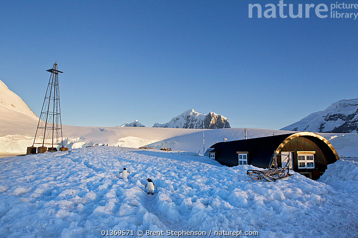 New accommodation buildings at Port Lockroy base. Port Lockroy, Antarctic Peninsula, Antarctica, December.  ,  ANTARCTICA,BUILDINGS,LANDSCAPES,LOCKROY,MOUNTAINS,OUTPOSTS,PENINSULA,POLAR,REMOTE,SNOW  ,  Brent Stephenson