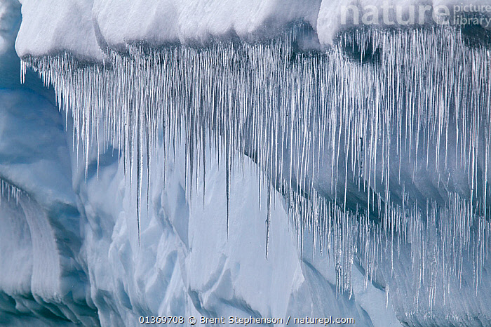 Icicles hanging from a large iceberg. Cierva Cove, Antarctic Peninsula, Antarctica, January.  ,  ANTARCTICA,CLIMATE CHANGE,COLD,GLOBAL WARMING,ICE,ICICLES,MELT,POLAR,THAW  ,  Brent Stephenson