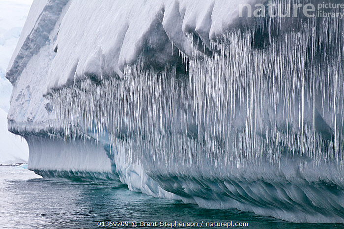 Icicles hanging from a large iceberg. Cierva Cove, Antarctic Peninsula, Antarctica, January.  ,  ANTARCTICA,CLIMATE CHANGE,GLOBAL WARMING,ICE,ICEBERGS,ICICLES,LANDSCAPES,MELT,POLAR,SEASCAPES,THAW  ,  Brent Stephenson