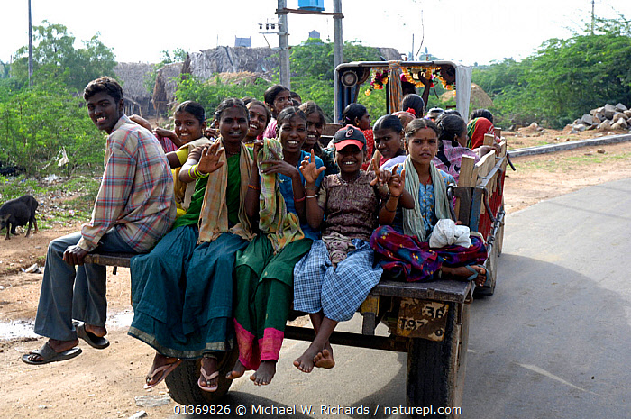 Workers on their way to work on back of pick up truck, Daroji, Karnataka, India, 2006  ,  ASIA,DANGEROUS,FEMALES,GROUPS,INDIAN SUBCONTINENT,MALES,PEOPLE,ROADS,TRAFFIC,TRANSPORT,VEHICLES,WORKING  ,  Michael W. Richards