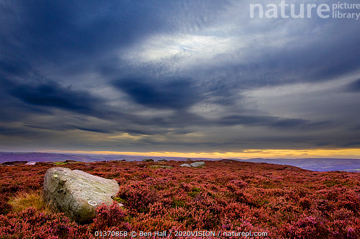 Scenic view of Burbage Moor with stormy sky, Peak District NP, September, UK  ,  ATMOSPHERIC,CLOUDS,EUROPE,MOORLAND,OVERCAST,PEAK DISTRICT,ROCKS,SKY,2020VISION,ENGLAND,FLOWERS,LANDSCAPES,NP,UK,Weather,National Park,United Kingdom  ,  Ben Hall / 2020VISION