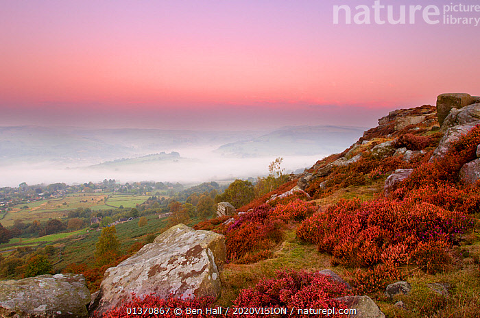 Scenic view from Curbar Edge at dawn, with mist in the distance and flowering heather (ericaceae sp) in the foreground, Peak District NP, UK, September 2011  ,  ATMOSPHERIC,CALLUNA VULGARIS ,DAWN,EUROPE,MOORLAND,PEAK DISTRICT,PINK,ROCKS,SKY,2020VISION,COLOURFUL,ENGLAND,FLOWERS,LANDSCAPES,MIST,NP,SUNRISE,UK,National Park,United Kingdom  ,  Ben Hall / 2020VISION