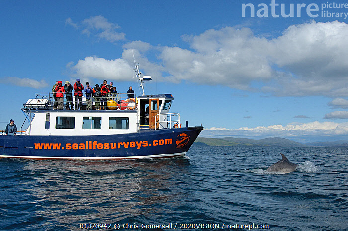 Passengers on observation deck of Sea Life Surveys vessel Sula Beag watching a Bottlenose dolphin (Tursiops truncatus) in the Sound of Mull, Inner Hebrides, Scotland, UK, July 2011  ,  2020VISION,DELPHINIDAE,DOLPHINS,LEISURE,MARINE,PEOPLE,PROFILE,SCOTLAND,SEAS,TOURISM,UK,VERTEBRATES,WATCHING,ATLANTIC OCEAN,BOATS,BOTTLENOSE,BREACHING,CETACEANS,COASTAL WATERS,COASTS,EUROPE,GROUPS,MAMMALS,MS,ONE ANIMAL,OUTDOORS,SURFACE,TEMPERATE,WORKING BOATS,United Kingdom  ,  Chris Gomersall / 2020VISION