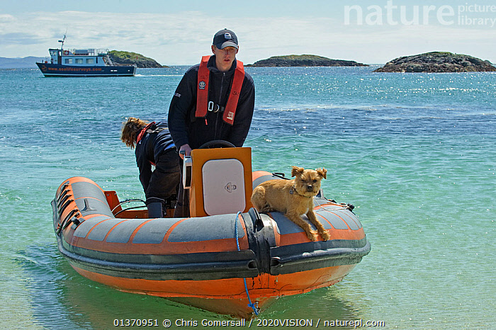 Two Sea Life Surveys wildlife guides and border terrier dog in an inflatable boat, at the Cairns of Coll, Inner Hebrides, Scotland, UK, July 2011  ,  2020VISION,BALANCED,LEISURE,PEOPLE,RIBS,SCOTLAND,SEAS,UK,BOATS,COASTAL WATERS,COASTS,DOGS,EUROPE,FRONT VIEWS,OUTDOORS,TENDERS,TWO,MOTORBOATS  ,OPEN-BOATS  ,United Kingdom  ,  Chris Gomersall / 2020VISION