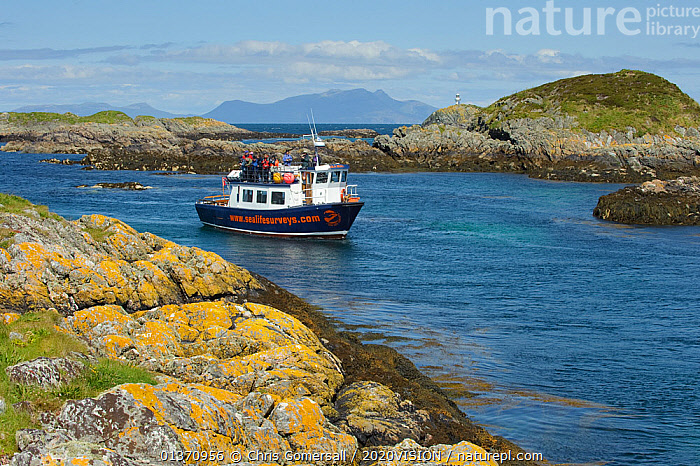 Wildlife watching tourists on the observation deck of Sea Life Surveys boat Sula Beag at the Cairns of Coll, Inner Hebrides, Scotland, UK, July 2011  ,  2020VISION,ISLANDS,LANDSCAPES,LEISURE,PEOPLE,SCOTLAND,SEAS,TOURISM,UK,WATCHING,BOATS,COASTAL WATERS,EUROPE,GROUPS,OUTDOORS,WORKING BOATS,United Kingdom  ,  Chris Gomersall / 2020VISION