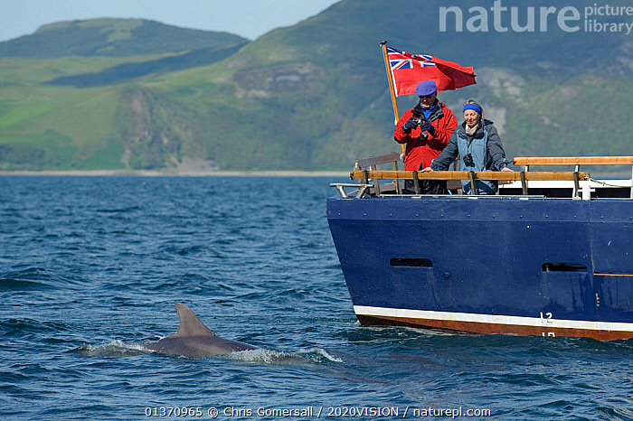 Passengers on the aft deck of Sea Life Surveys vessel Sula Beag watching a Bottlenose dolphin (Tursiops truncatus) in the Sound of Mull, Inner Hebrides, Scotland, UK, July 2011  ,  ATLANTIC OCEAN,BOATS,COASTAL WATERS,COASTS,EUROPE,MS,ONE ANIMAL,OUTDOORS,SURFACE,TEMPERATE,TWO,WORKING BOATS,2020VISION,LEISURE,MARINE,PEOPLE,SCOTLAND,SEAS,STERNS,TOURISM,UK,WATCHING,BOAT-PARTS,United Kingdom,Dolphins,Cetaceans,Mammals  ,  Chris Gomersall / 2020VISION