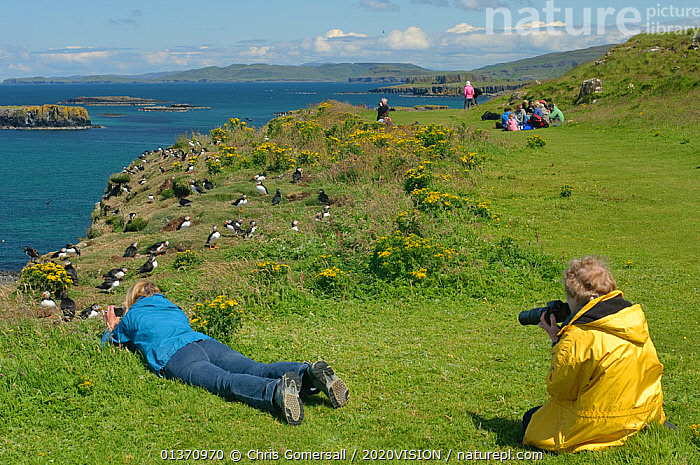 Tourists watching and taking photographs of Atlantic puffins (Fratercula arctica) at their breeding colony on Lunga, Inner Hebrides, Scotland, UK, July 2011. 2020VISION Book Plate.  ,  2020VISION,2020vision book plate,atlantic puffin,AUKS,BIRDS,COASTAL WATERS,EUROPE,FLOCKS,GROUPS,LEISURE,outdoors,PEOPLE,PHOTOGRAPHY,SCOTLAND,SEABIRDS,seas,SUMMER,TOURISM,UK,VERTEBRATES,watching,United Kingdom  ,  Chris Gomersall / 2020VISION