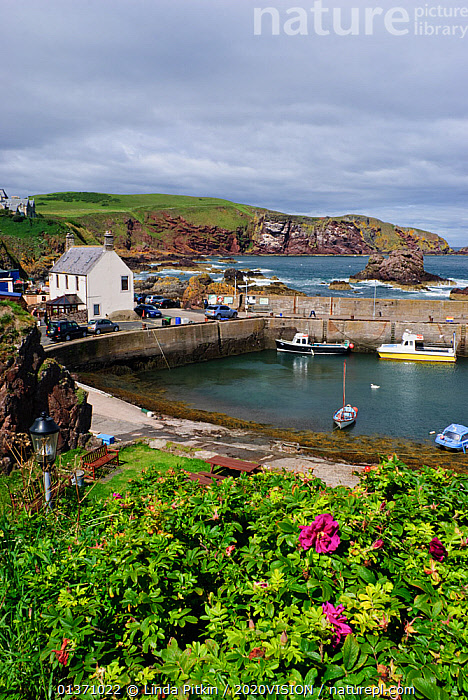 St Abbs harbour (St Abbs and Eyemouth Voluntary Marine Reserve), Berwickshire, Scotland, August 2011  ,  ATLANTIC,COASTS,EUROPE,VERTICAL,2020VISION,LANDSCAPES,SCOTLAND,SEAS,UK,Marine,United Kingdom,2020cc  ,  Linda Pitkin / 2020VISION