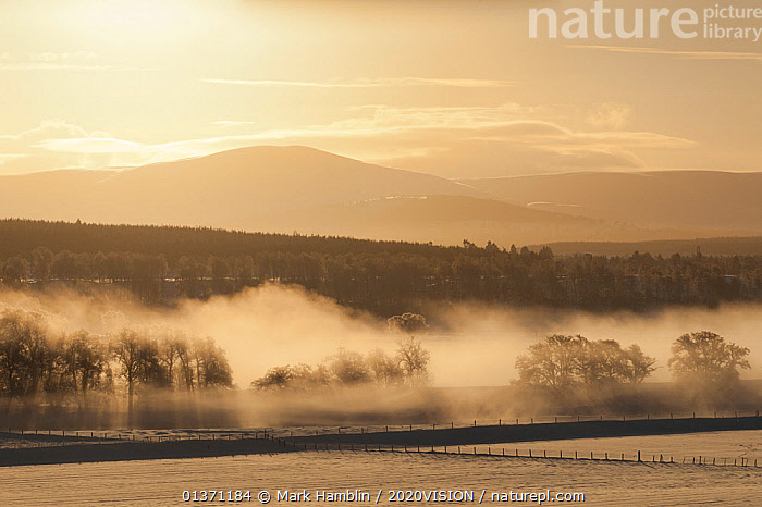 Mist over River Spey and Strathspey in winter, Cairngorms NP, Scotland, UK, December 2010  ,  ATMOSPHERIC,CAIRNGORMS,EUROPE,UPLANDS,2020VISION,HIGHLANDS,LANDSCAPES,MIST,NP,RESERVE,RIVERS,SCOTLAND,UK,WINTER,National Park,United Kingdom  ,  Mark Hamblin / 2020VISION