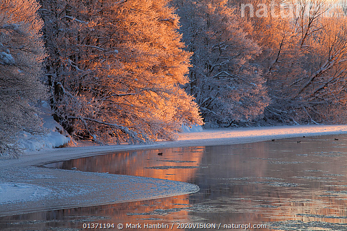 Partially frozen River Spey in winter, Cairngorms NP, Scotland, UK, December 2012  ,  CAIRNGORMS,COLD,EUROPE,FROZEN,TREES,UPLANDS,2020VISION,HIGHLANDS,ICE,LANDSCAPES,NP,RESERVE,RIVERS,SCOTLAND,SNOW,UK,WINTER,National Park,PLANTS,United Kingdom,2020cc  ,  Mark Hamblin / 2020VISION