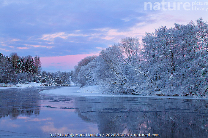Partially frozen River Spey with frosted trees at dusk in winter, Cairngorms NP, Scotland, UK, December 2012. 2020VISION Book Plate.  ,  2020VISION,2020vision book plate,ATMOSPHERIC,cairngorms,COLD,DAWN,DUSK,EUROPE,FROST,Frozen,HIGHLANDS,ICE,LANDSCAPES,NP,RESERVE,RIVERS,SCOTLAND,SNOW,twilight,UK,UPLANDS,WINTER,Weather,National Park,United Kingdom  ,  Mark Hamblin / 2020VISION
