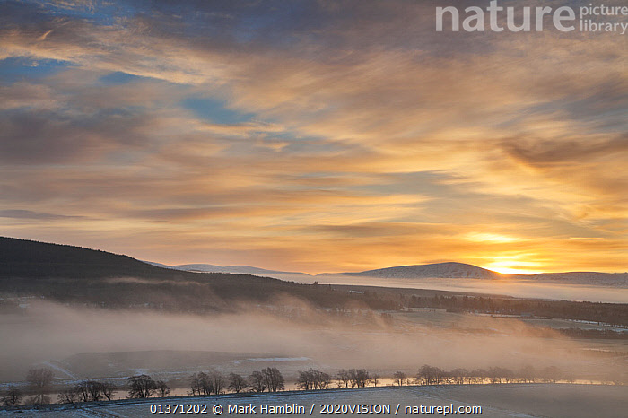 Mist over River Spey and Strathspey in winter, Cairngorms NP, Scotland, UK, December 2010  ,  ATMOSPHERIC,CAIRNGORMS,CLOUDS,EUROPE,SUNSET,UPLANDS,2020VISION,HIGHLANDS,LANDSCAPES,MIST,NP,RESERVE,RIVERS,SCOTLAND,SUNRISE,UK,WINTER,Weather,National Park,United Kingdom  ,  Mark Hamblin / 2020VISION