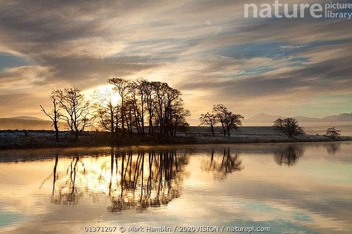Alder trees (Alnus hirsuta) silhouetted and reflected in River Spey in winter, Cairngorms NP, Scotland, UK, December 2010  ,  CAIRNGORMS,EUROPE,PLANTS,REFLECTIONS,SUNSET,TREES,UPLANDS,2020VISION,BETULACEAE,DICOTYLEDONS,HIGHLANDS,LANDSCAPES,NP,RESERVE,RIVERS,SCOTLAND,SILHOUETTES,SUNRISE,UK,WINTER,National Park,United Kingdom  ,  Mark Hamblin / 2020VISION