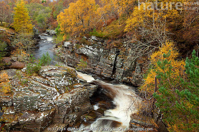 River Tromie running through autumnal woodland, Glenfeshie, Cairngorms NP, Scotland, UK, October 2010  ,  AUTUMN,BLURRED,CAIRNGORMS,EUROPE,MOVEMENT,TREES,UPLANDS,2020VISION,HIGHLANDS,LANDSCAPES,MOUNTAINS,NP,RESERVE,RIVERS,SCOTLAND,STREAMS,TIME EXPOSURE,UK,WOODLANDS,National Park,PLANTS,United Kingdom  ,  Mark Hamblin / 2020VISION