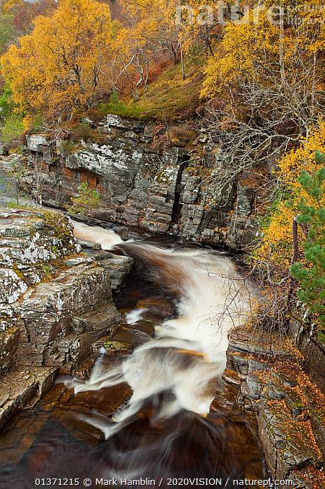 River Tromie running through autumnal woodland, Glenfeshie, Cairngorms NP, Scotland, UK, October 2010  ,  AUTUMN,BLURRED,CAIRNGORMS,EUROPE,MOVEMENT,TREES,UPLANDS,VERTICAL,2020VISION,HIGHLANDS,LANDSCAPES,MOUNTAINS,NP,RESERVE,RIVERS,SCOTLAND,STREAMS,TIME EXPOSURE,UK,WOODLANDS,National Park,PLANTS,United Kingdom  ,  Mark Hamblin / 2020VISION