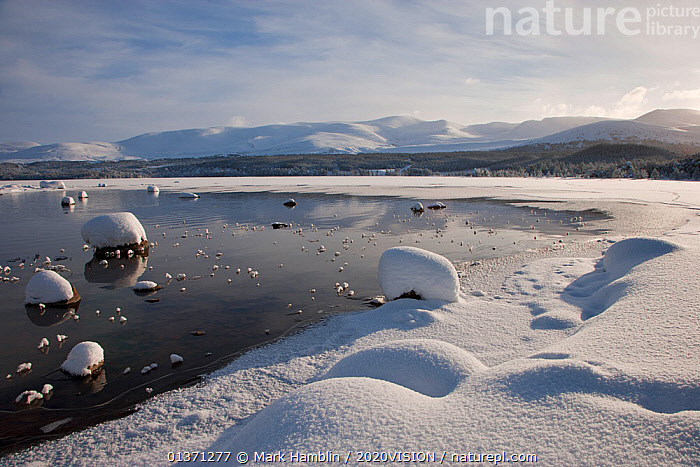 View of the shore of Loch Morlich in winter, with mountains in the background, Cairngorms NP, Scotland, UK, January 2010  ,  2020VISION,CAIRNGORMS,COLD,EUROPE,HIGHLANDS,ICE,LAKES,LANDSCAPES,MOUNTAINS,NP,RESERVE,SNOW,UK,UPLANDS,WETLANDS,WINTER,National Park,United Kingdom  ,  Mark Hamblin / 2020VISION