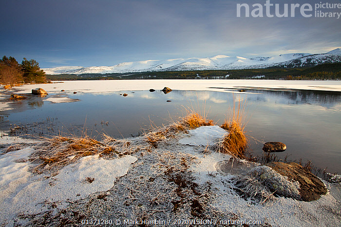 Loch Morlich and Cairngorm mountains in winter, Cairngorms NP, Scotland, UK, December 2010  ,  2020VISION,CAIRNGORMS,COLD,EUROPE,FROZEN,HIGHLANDS,ICE,LAKES,LANDSCAPES,MOUNTAINS,NP,REFLECTIONS,RESERVE,SNOW,UK,UPLANDS,WETLANDS,WINTER,National Park,United Kingdom  ,  Mark Hamblin / 2020VISION