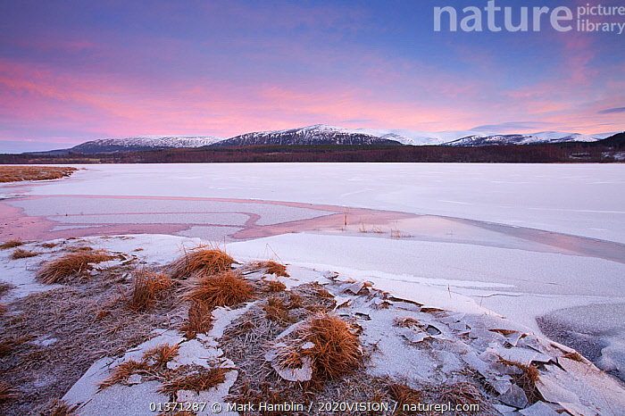 Shore of Loch Insh, frozen in winter, at dusk, Cairngorms NP, Scotland, UK, December 2010  ,  2020VISION,CAIRNGORMS,COLD,DAWN,DUSK,EUROPE,FROST,FROZEN,HIGHLANDS,ICE,LAKES,LANDSCAPES,MOUNTAINS,NP,RESERVE,SNOW,TWILIGHT,UK,UPLANDS,WETLANDS,WINTER,Weather,National Park,United Kingdom  ,  Mark Hamblin / 2020VISION