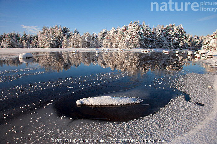 Loch Morlich near Aviemore, in winter, Cairngorms NP, Scotland, UK, January 2010  ,  2020VISION,CAIRNGORMS,COLD,EUROPE,FROZEN,HIGHLANDS,ICE,LAKES,LANDSCAPES,MOUNTAINS,NP,RESERVE,SNOW,UK,UPLANDS,WETLANDS,WINTER,National Park,United Kingdom  ,  Mark Hamblin / 2020VISION
