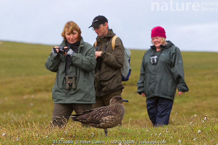 Birdwatchers walking and watching a Great skua (Stercorarius skua), Shetland Isles, Scotland, UK, July 2011  ,  2020VISION, bird watching, BIRDS, birdwatching, camera, cameras, COASTAL-WATERS, eco tourism, ecotourism, EUROPE, LEISURE, MOORLAND, one, outdoors, PEOPLE, photographer, PHOTOGRAPHY, SCOTLAND, SEABIRDS, seas, SKUAS, Stercorarius skua, THREE, TOURISM, UK, VERTEBRATES,United Kingdom  ,  Peter Cairns / 2020VISION