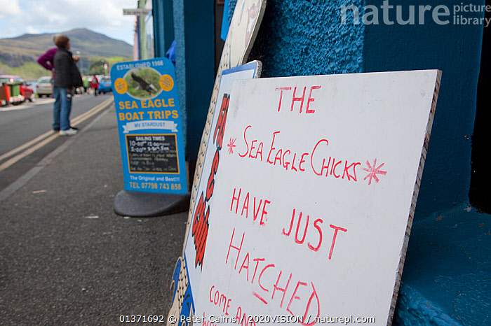 Sign announcing the hatching of White-tailed sea eagle chicks, Portree, Skye, Scotland, UK, June 2011  ,  BIRDS,COASTAL WATERS,ECO TOURISM,EUROPE,SIGNS,2020VISION,ACCIPITRIDAE,BIRDS OF PREY,EAGLES,ECOTOURISM,LEISURE,SCOTLAND,SEAS,TOURISM,UK,VERTEBRATES,United Kingdom  ,  Peter Cairns / 2020VISION