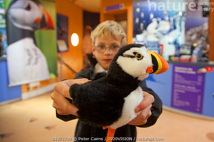 Boy holding toy Puffin  on sale at souvenir shop inside the Scottish Seabird Centre in North Berwick showing economic benefits of presence of Bass Rock, Firth of Forth, Scotland, UK, August 2011  ,  2020VISION,BOY,BUILDINGS,ECOTOURISM,LEISURE,PEOPLE,SCOTLAND,SEAS,TOURISM,TOY,TRADE,UK,VERTEBRATES,ATLANTIC PUFFIN,AUKS,BIRDS,CAUSASIAN,CHILDREN,COASTAL WATERS,ECO TOURISM,EUROPE,INDOORS,ONE,SEABIRDS,TOYS,United Kingdom  ,  Peter Cairns / 2020VISION