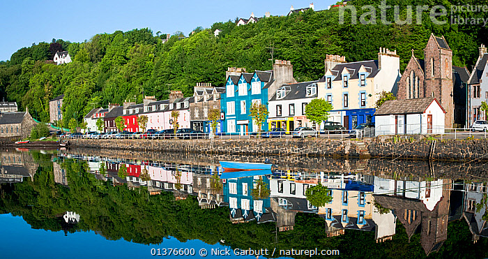 Painted houses along the sea front, Tobermory, Isle of Mull, Inner Hebrides, Scotland, UK, June 2010  ,  BLUE,building exterior,catalogue4,COASTS,COLOURFUL,EUROPE,harbour wall,housing,inner hebrides,Isle of Mull,LANDSCAPES,MOORED,Nobody,painted,panoramic image,promenade,reflection,REFLECTIONS,rowing boat,SCOTLAND,seafront,Tobermory,TOWNS,travel destination,Tree,UK,VILLAGES,WATER,woodland,United Kingdom  ,  Nick Garbutt