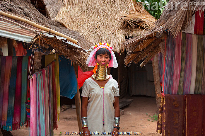Long necked woman with many neck rings, belonging to Padaung Tribe, Thailand  ,  ASIA,asian ethnicity,building exterior,catalogue4,CULTURES,custom,FEMALES,front view,half length,housing,local people,looking at camera,mid adult,neck ring,necks,one person,one woman only,ornate,Padaung Tribe,PEOPLE,portrait,PORTRAITS,SOUTH EAST ASIA,STANDING,THAILAND,thatched,TRADITIONAL,tribal,tribal people,TRIBES,village,WOMAN  ,  Ernie Janes