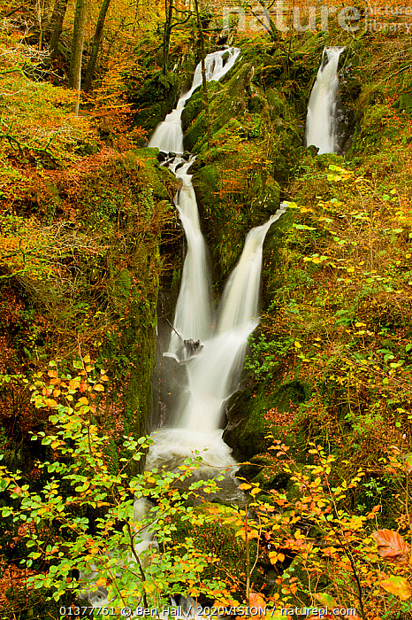 Stock Ghyll waterfall in autumn, Lake District NP, Cumbria, England, UK, November  ,  AUTUMN,BLURRED,COLOUR CHANGES,EUROPE,HILLS,LAKE DISTRICT,MOVEMENT,TREES,UPLANDS,VERTICAL,WATERFALLS,2020VISION,ENGLAND,LANDSCAPES,NP,RESERVE,STREAMS,TIME EXPOSURE,UK,WOODLANDS,National Park,PLANTS,United Kingdom  ,  Ben Hall / 2020VISION