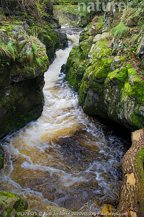 Tributary of the River Tweed where Brown trout (Salmo trutta) and Atlantic salmon (Salmo salar) come to spawn, Cheviot Hills, Northumberland, England, UK, October  ,  EUROPE,VERTICAL,WATERFALLS,2020VISION,ENGLAND,LANDSCAPES,RIVERS,UK,United Kingdom,2020cc  ,  Rob Jordan / 2020VISION