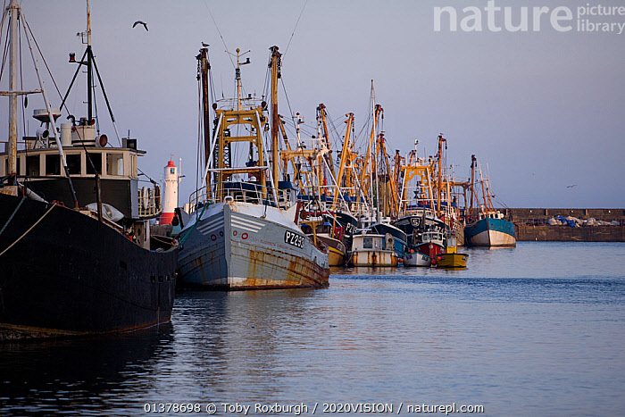 Fishing trawlers moored in Newlyn Harbour, Cornwall, England, UK, March 2011  ,  2020VISION,ENGLAND,FISHING BOATS,LANDSCAPES,SEAS,UK,BOATS,COASTAL WATERS,EUROPE,HARBOURS,WORKING BOATS,United Kingdom  ,  Toby Roxburgh / 2020VISION