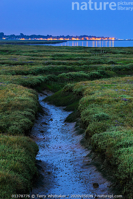 Saltmarsh at twilight, with lights of Bradwell-on-Sea in the background, Abbotts Hall Farm Nature Reserve, Essex, England, UK, July 2011  ,  2020VISION,COASTAL REALIGNMENT,DUSK,ENGLAND,HABITAT,LANDSCAPES,UK,CLIMATE CHANGE,COASTS,DAWN,EUROPE,MANAGED RETREAT,REGENERATION,RISE,RISING,SALTMARSHES,SEA LEVEL,SEA LEVELS,TWILIGHT,VERTICAL,United Kingdom  ,  Terry Whittaker / 2020VISION